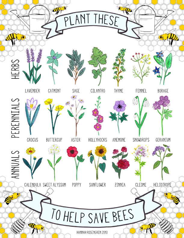 Plants to help attrack bees
