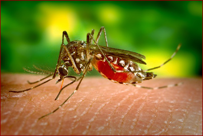 How to Keep Your Home Mosquito Free