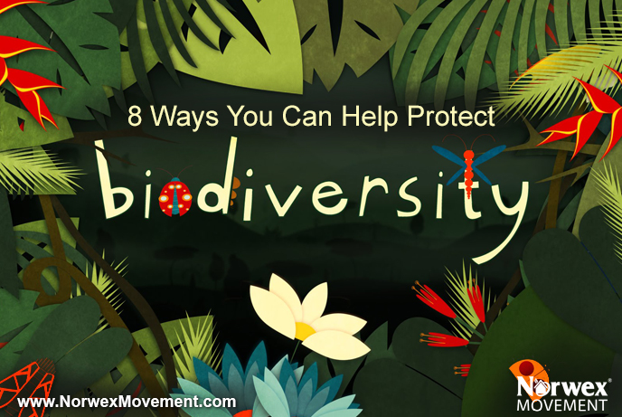 For the Beauty of the Earth: 8 Ways You Can Help Protect Biodiversity