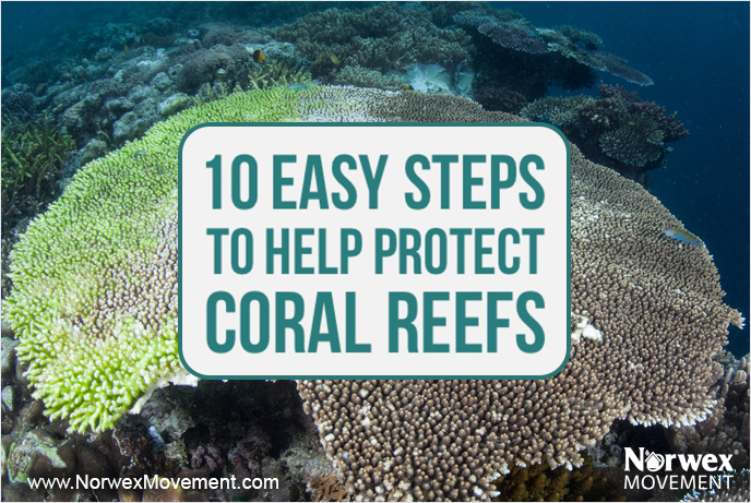 10 Easy Steps to Help Protect Coral Reefs