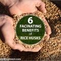 rice_husks