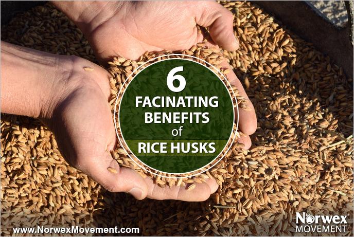 6 Fascinating Benefits of Rice Husks