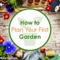 blog_image_garden