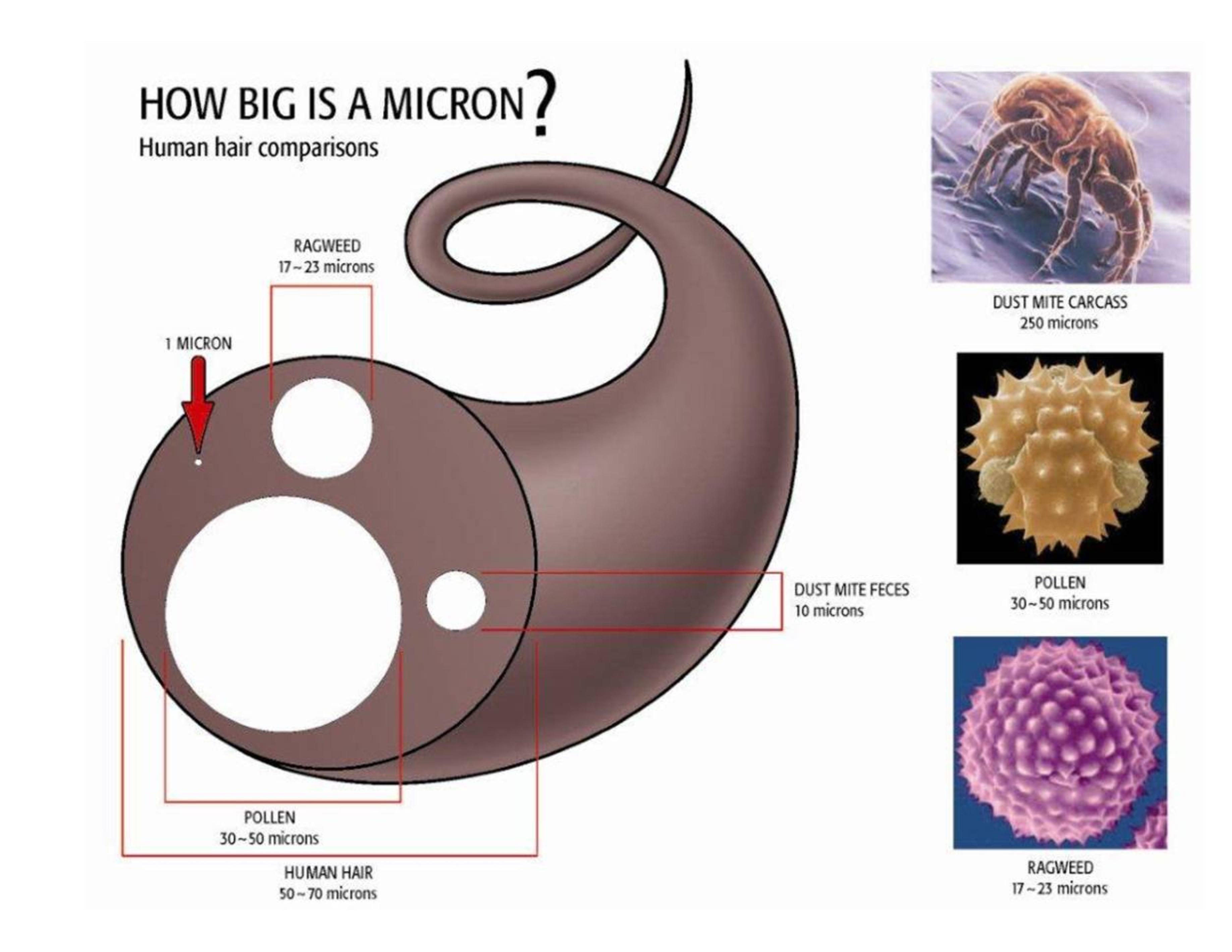 micron_infographic