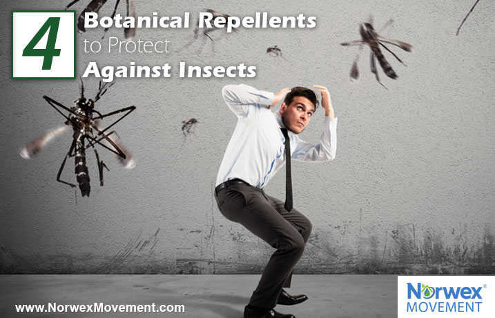 4 Botanical Repellents to Protect Against Insects