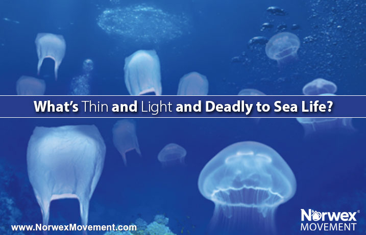 Plastic Bags and Jellyfish image