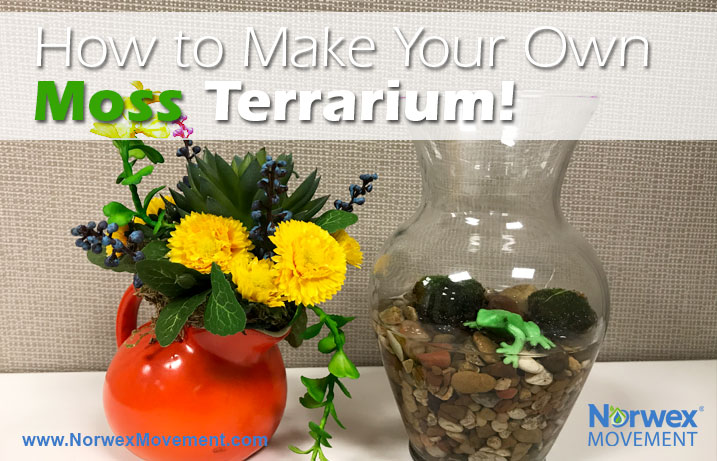 How to Make Your Own Moss Terrarium!
