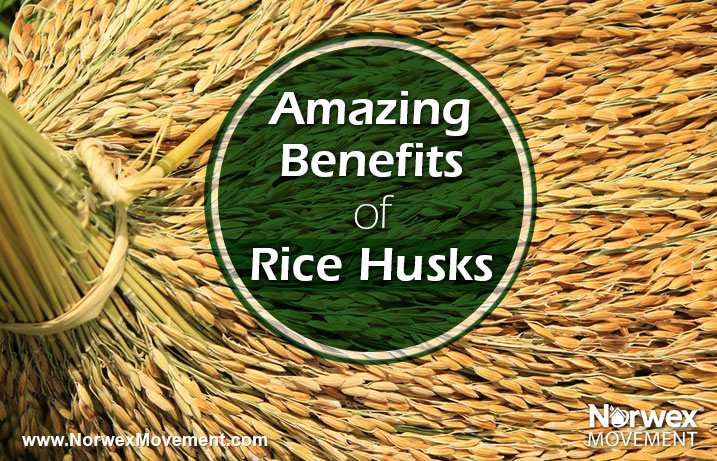 Amazing Benefits of Rice Husks