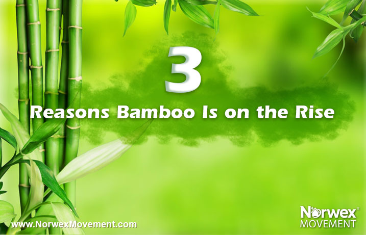 3 Reasons Bamboo Is on the Rise