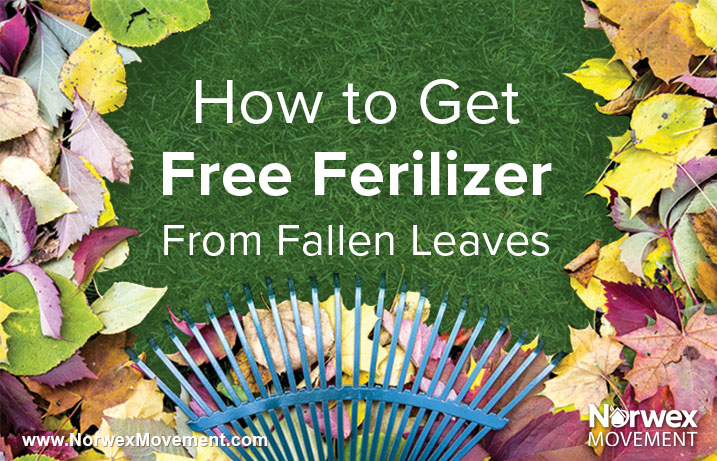 How to Get Free Fertilizer From Fallen Leaves