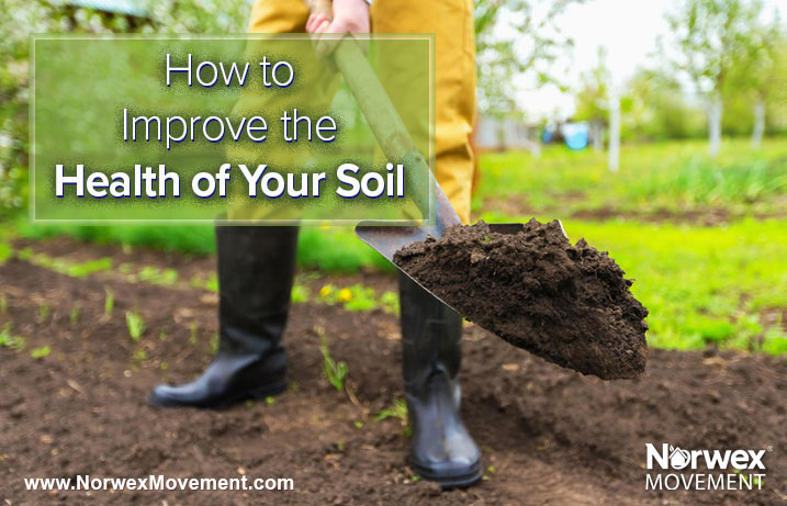 How to Improve the Health of Your Soil