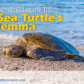 Overwhelmed at the Beach: A Sea Turtle's Dilemma