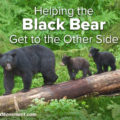 Helping the Black Bear Get to the Other Side