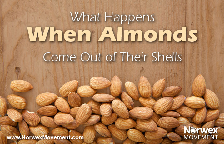 What Happens When Almonds Come Out of Their Shells