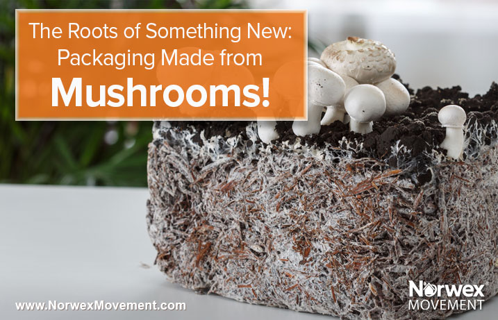 The Roots of Something New: Packaging Made from Mushrooms!