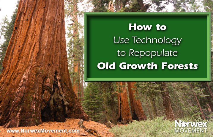 How to Use Technology to Repopulate Old Growth Forests