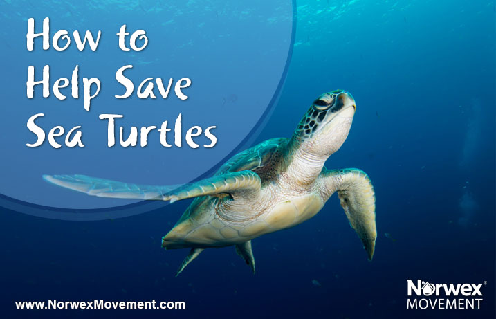 How to Help Save Sea Turtles