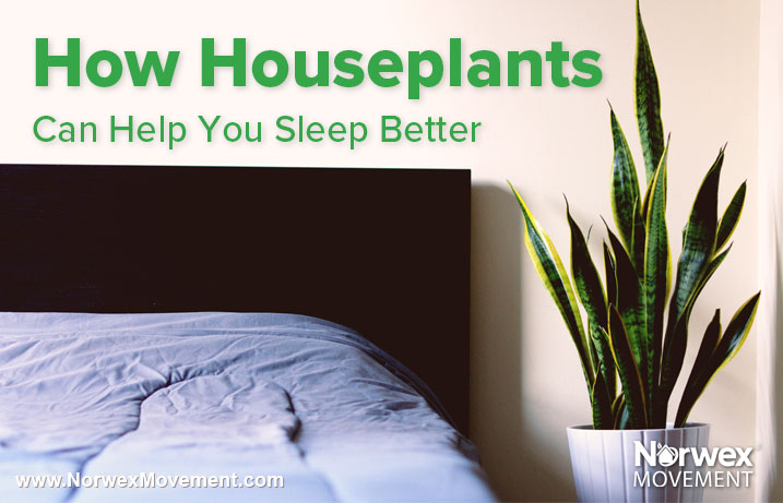 How Houseplants Can Help You Sleep Better