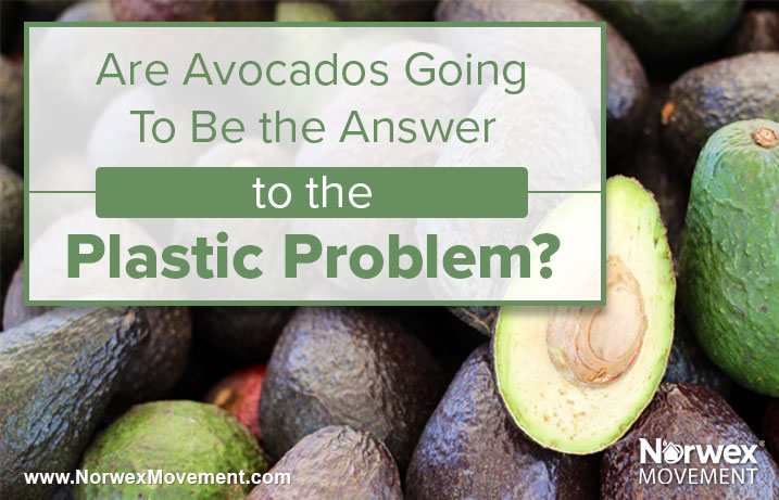 Are Avocados Going To Be the Answer to the Plastic Problem?