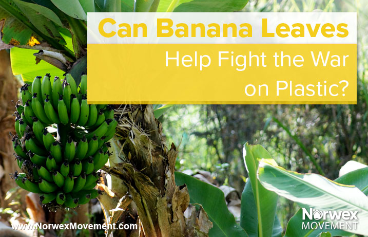 Can Banana Leaves Help Fight the War on Plastic?