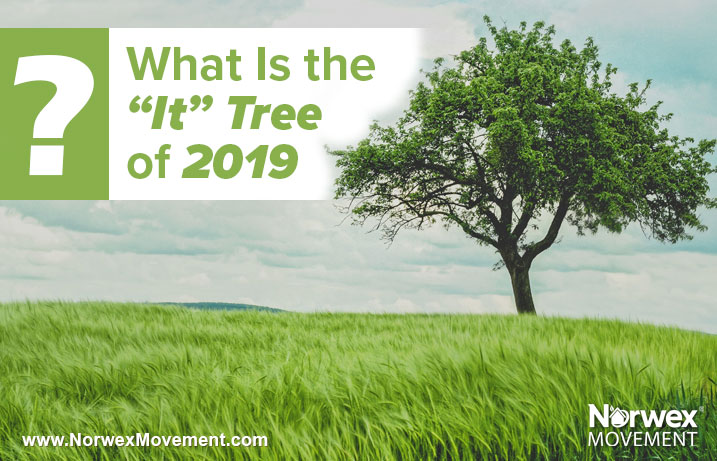 "What Is the ""It"" Tree of 2019?"