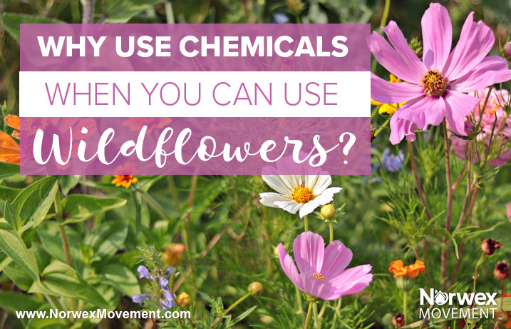 Why Use Chemicals When You Can Use Wildflowers?