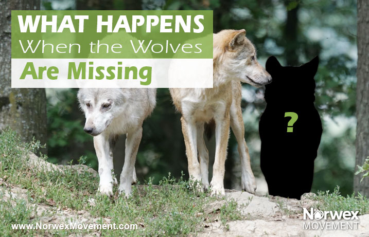 What Happens When the Wolves Are Missing